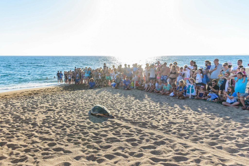 Journey Greece Costa Navarino Sea Turtle Release Beach