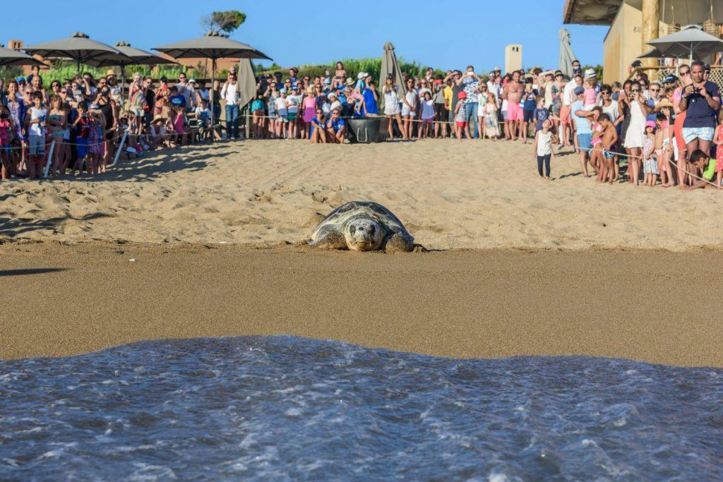 Journey Greece Costa Navarino Sea Turtle Released