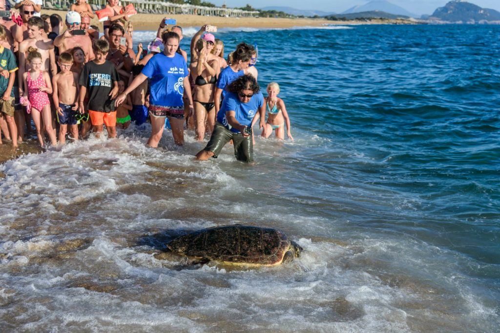 Journey in Greece Costa Navarino Sea Turtle Release