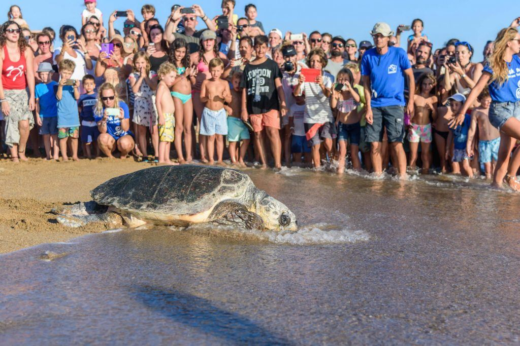 Journey to Greece Costa Navarino Sea Turtle Release