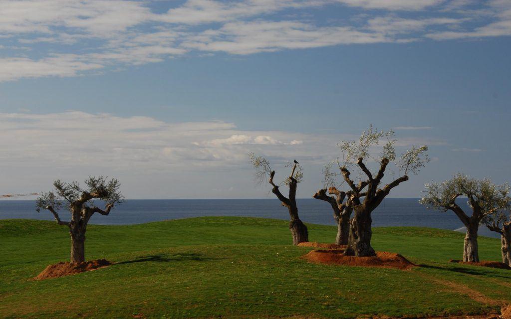 the-romanos-resort-costa-navarino-journey-greece-olive-trees-replanted