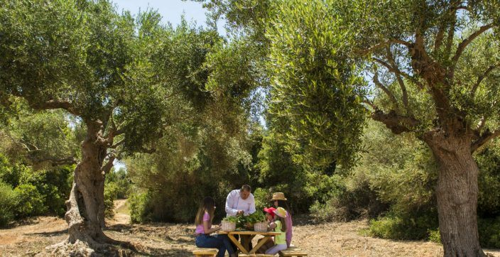 Farm to table experience at romanos costa navarino greece