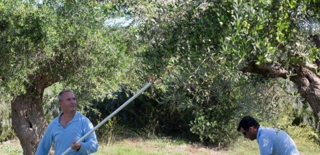 two men pruning trees at daytime