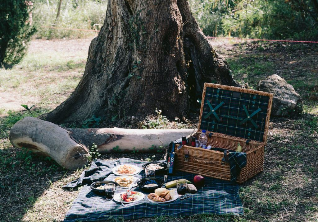 picnic basket beside tree at daytime